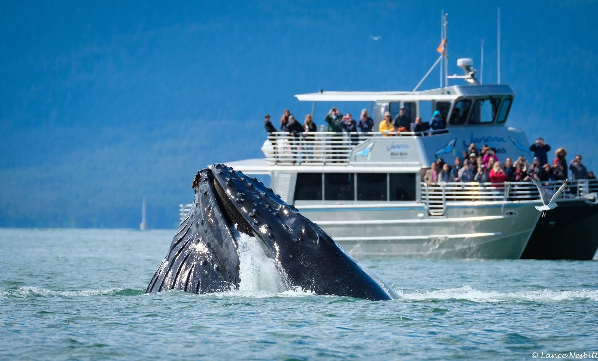 The Humpback Whale Explained
