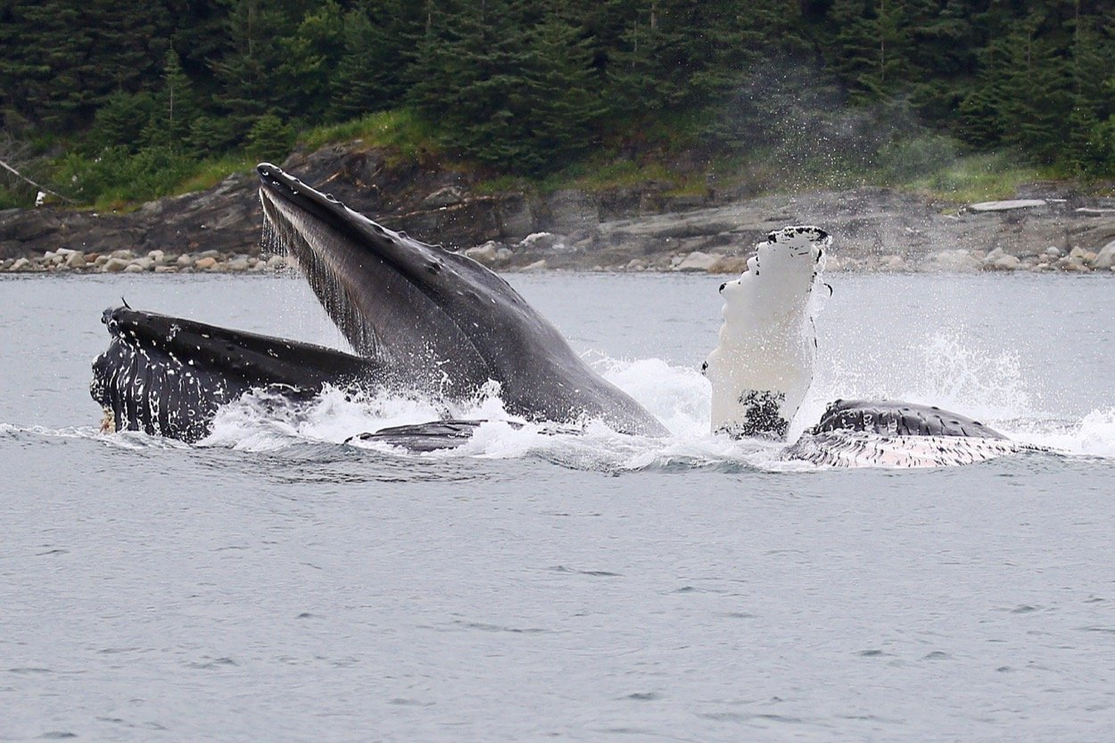 Whet Your Appetite With Whale Watching And Lunch!
