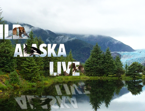 Juneau: Front and Center in Tonight's Final WILD ALASKA LIVE Segment