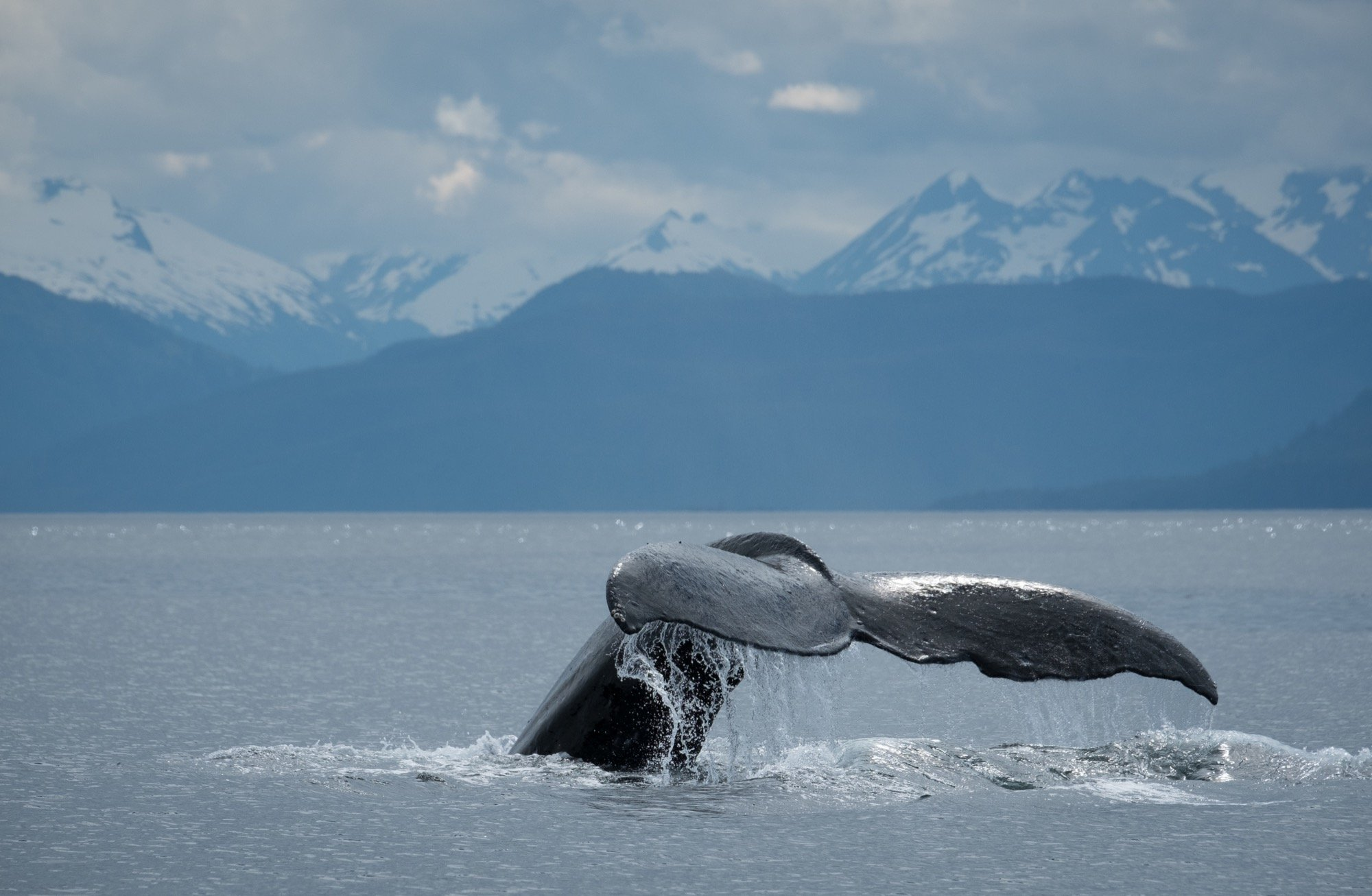 25 Crazy Factoids about the Humpback Whale!