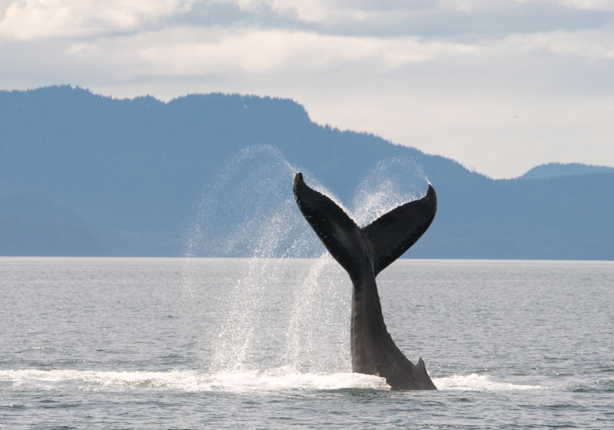 Ten Must Know Facts on the Humpback Whale