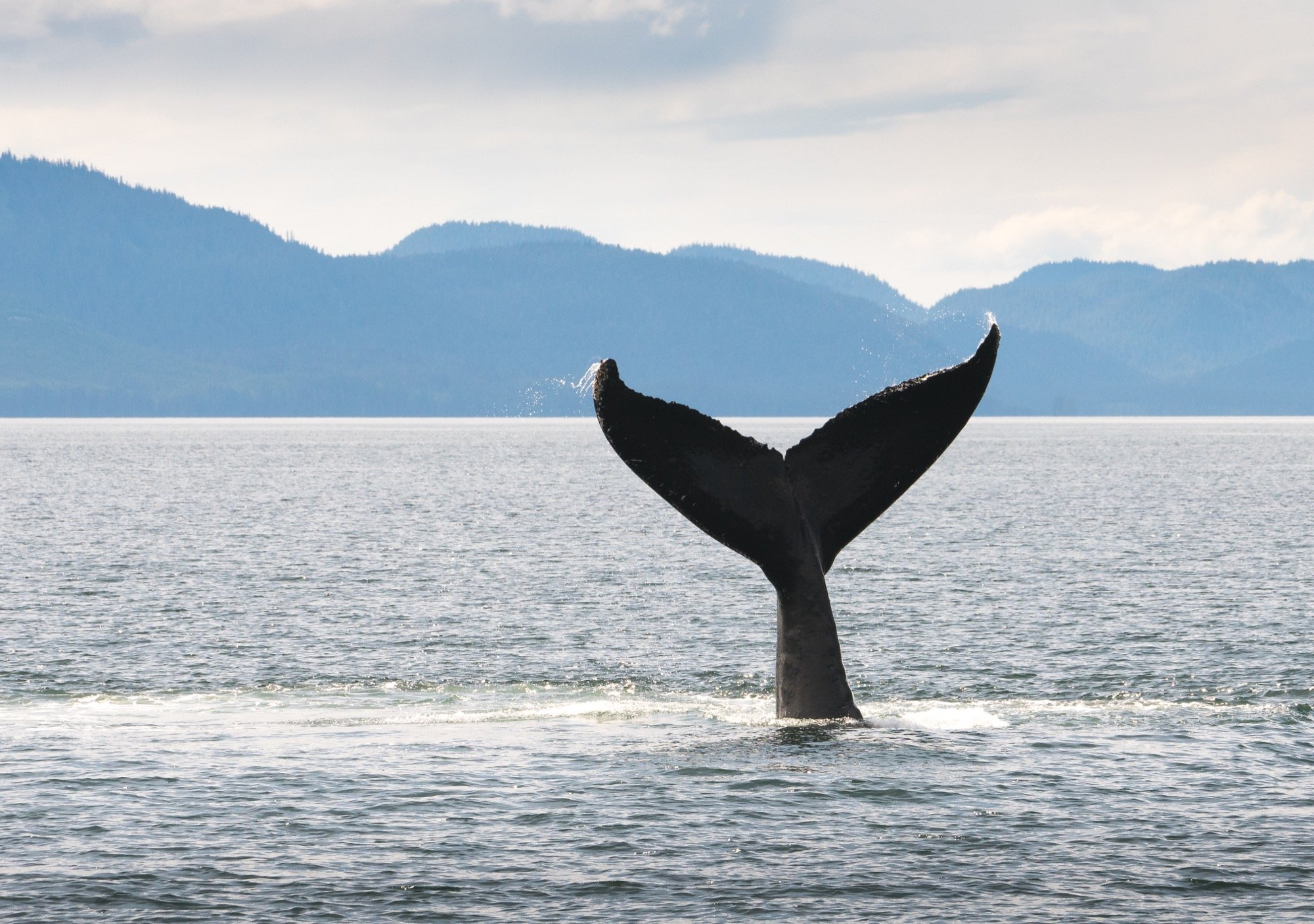Can You Really Guarantee Whale Sightings?