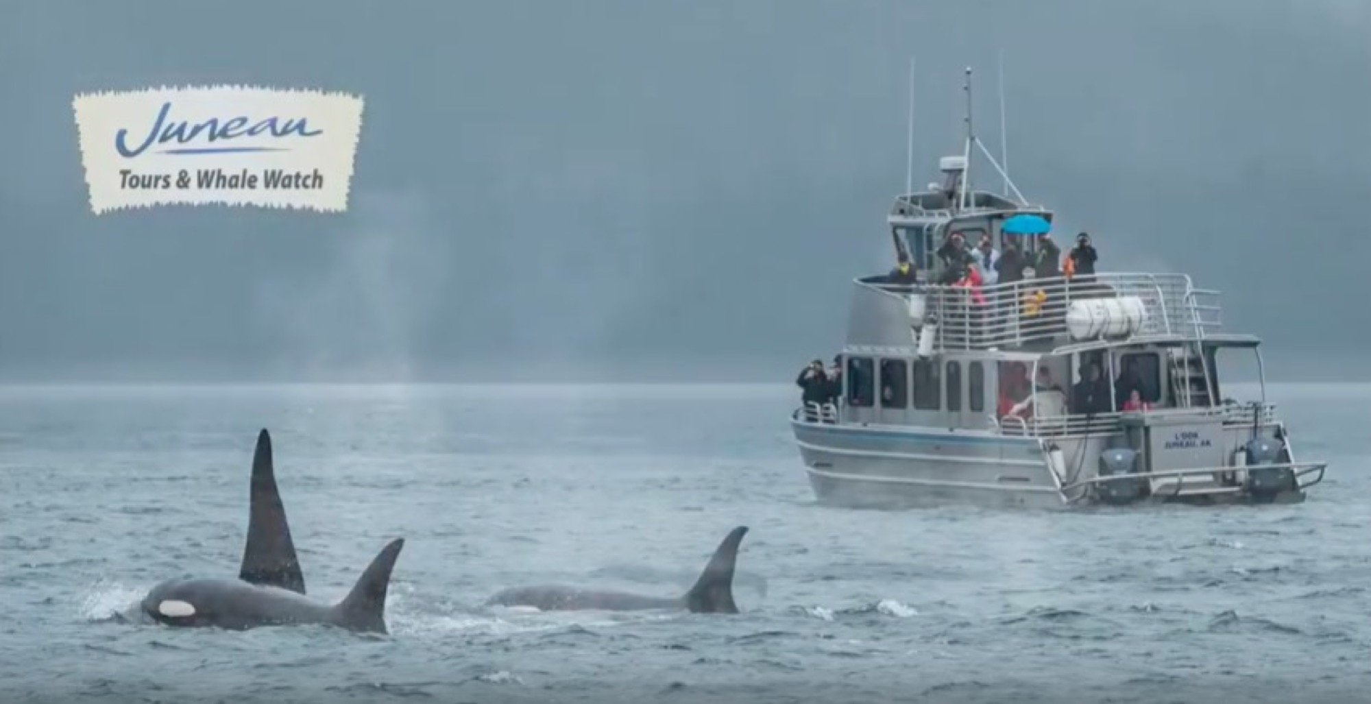 Latest Juneau Whale Watch movie: Whales of 2017